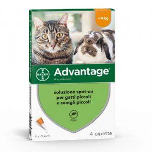 bayer advantage 80 gatti e conigli da +4 kg